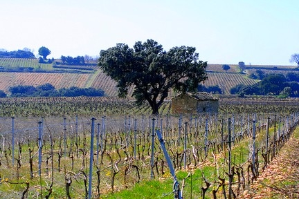 Wein Sardinien